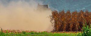 Landwirte vor Dürreschäden besser schützen